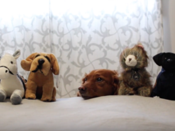 video, youtube, rocky and friends