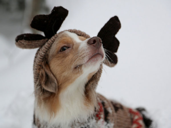 dogs in sweaters, dog in sweater, reindeer dog, pet safety, winter safety