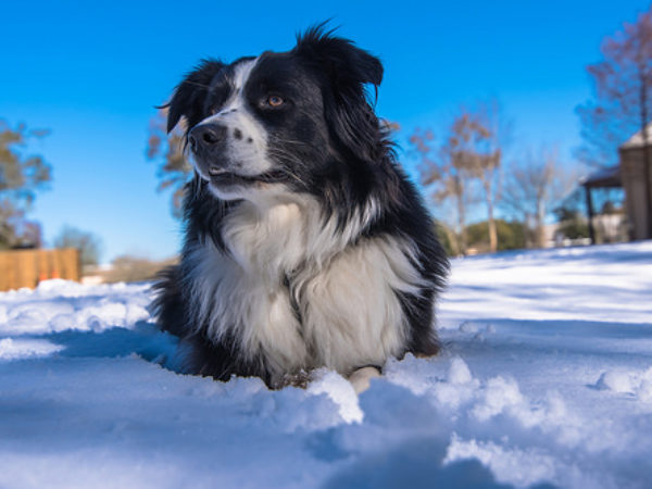 cold weather, pets, cold, cold weather warning