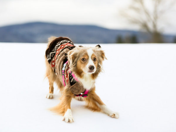 cold weather, dog in coat, dog in jacket, ontario SPCA, dog