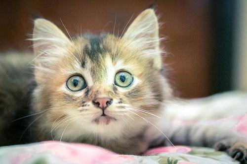 cats, cat, cute kitten, depression, mental health, ontario SPCA