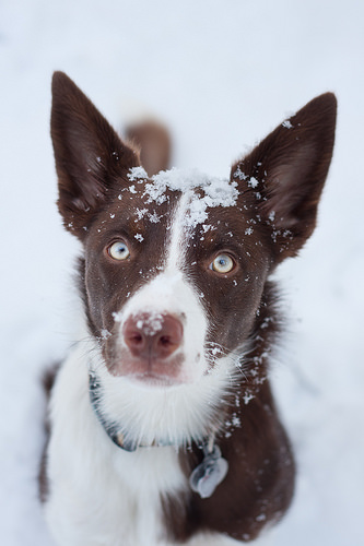 dog walk in the winter, dog tips, safety tips, pet safety