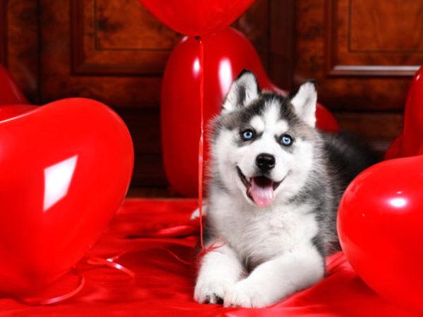 valentine's day, valentine, ontario SPCA, doggie date