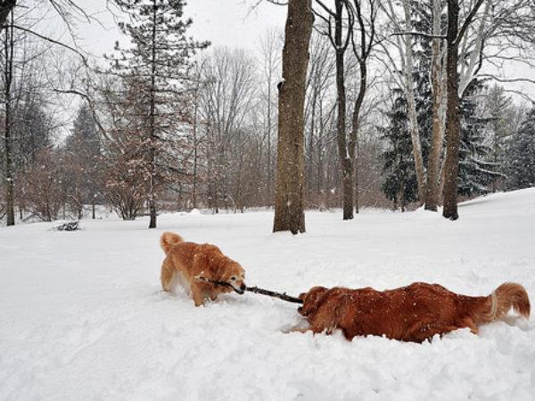 ontario spca, family day, pet friendly activities, winter