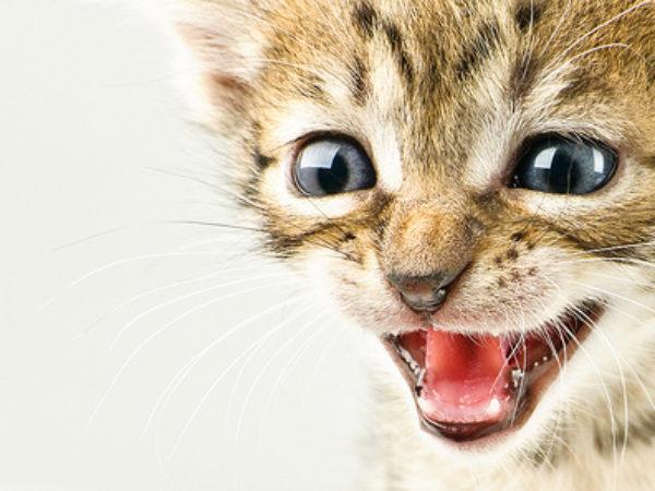 cat angry, cats, cute cat, kitten, kittens