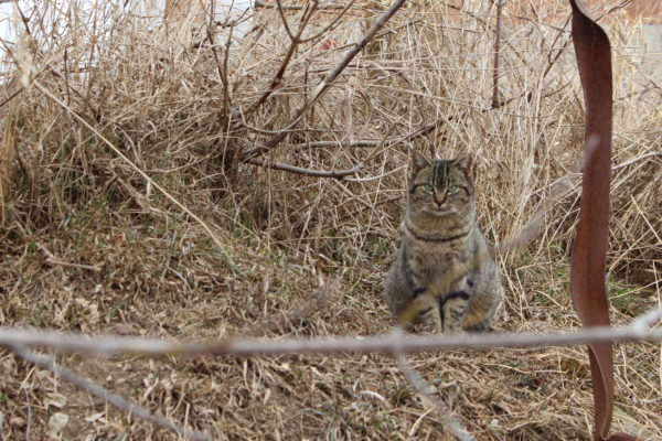 feral cats, feral cat caretaker, ontario SPCA