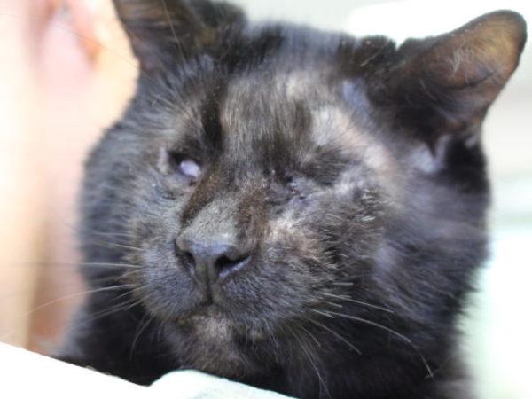 felix, cat, rescue cat, blind cat