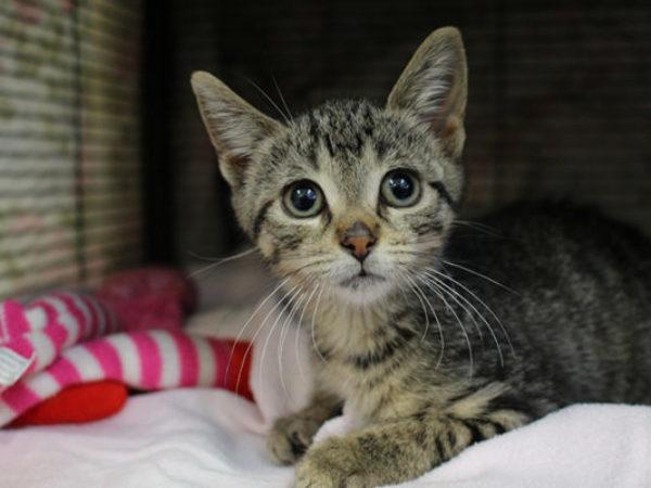 Valentina, cat for adoption, cats, adopt