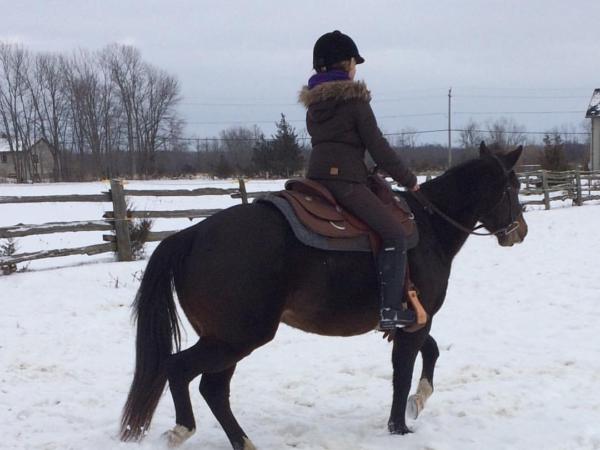 horses, horse, horse adoption, pets
