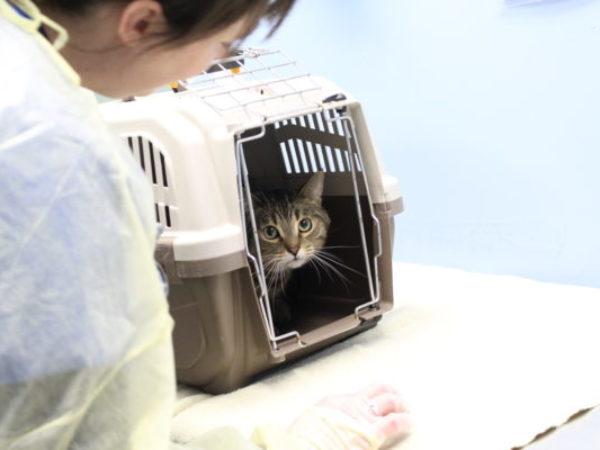 Ontario SPCA, cat transfer, animal transfer team