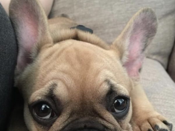 Emergency preparedness, EP week, ontario SPCA, pet safety