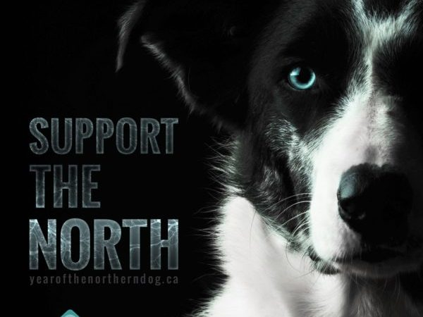 year of the northern dog, northern dogs, dogs, dog,
