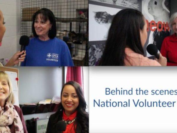 volunteer, volunteers
