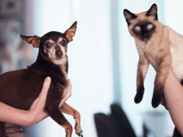 Help dogs and cats get along