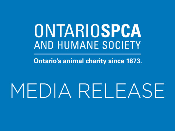 Stephanie Johns, Author at Ontario SPCA and Humane Society
