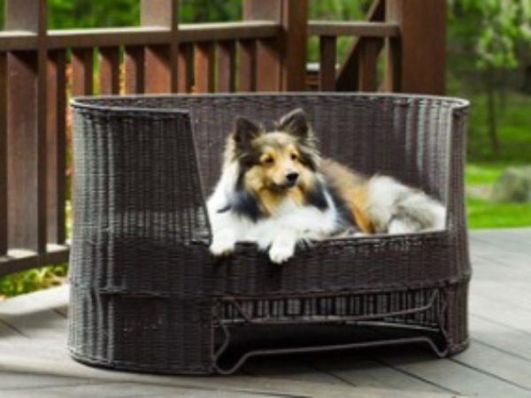 Cottage safety tips, pet tips, pet safety