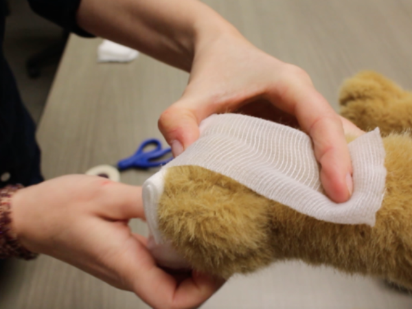 pet first aid, paw bandaging, ontario SPCA, blog, pets, video, youtube