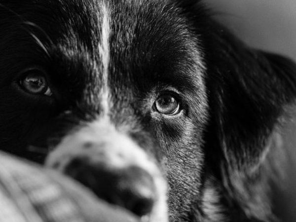 grieving a pet, ontario spca