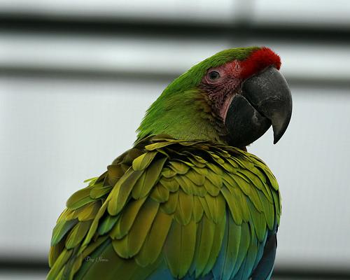 amazon parrot, parrots, parrot care