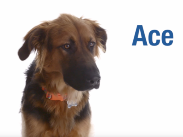second chances calendar star, ontario spca, paws and give