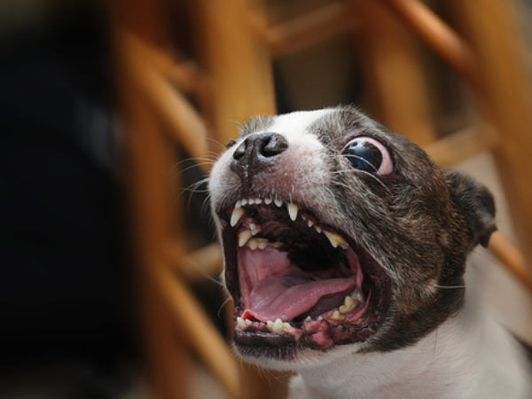 why do dogs whine, ASPCA, dog with mouth open