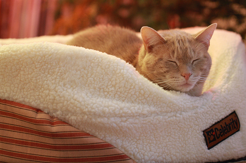 cats, cat, hotel, pet-friendly accommodation, pets, travel