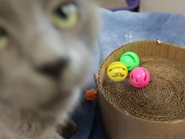 DIY cat toy, DIY Cat toys