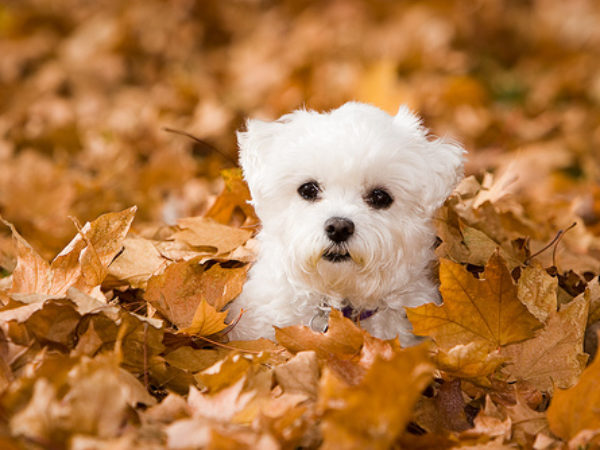 fall leaves, fall safety tips