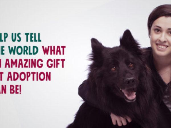 iAdopt for the Holidays, adoption