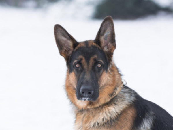 cold weather safety, cold weather, pet tips