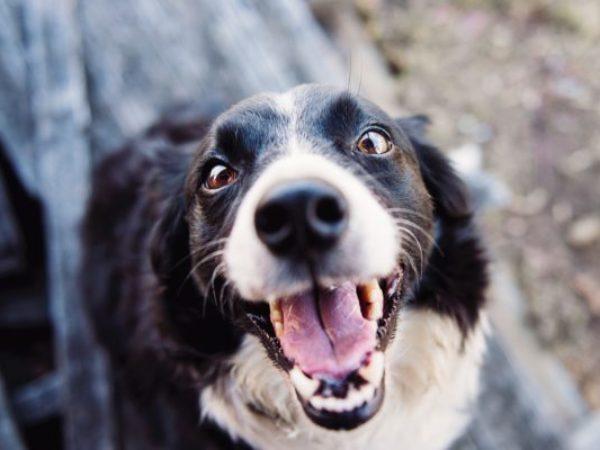 shelter dog, dog, adopt a dog