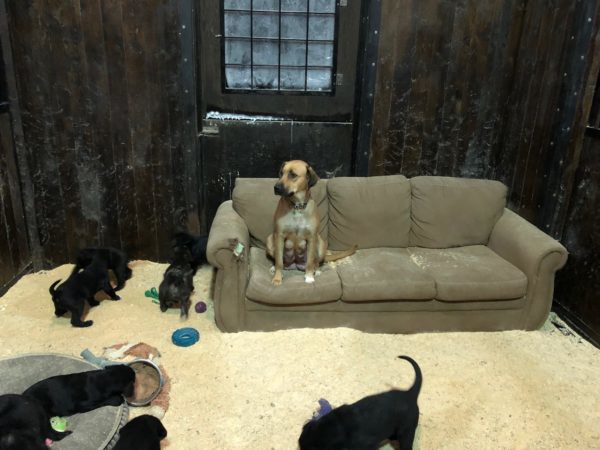 Dixie, puppies