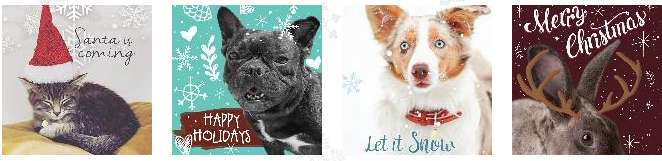 Ontario spca holiday cards, paws and give