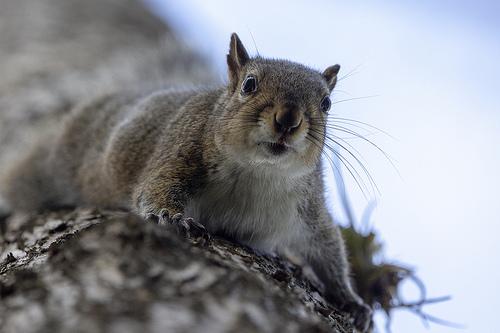 squirrel, squirrels, wildlife