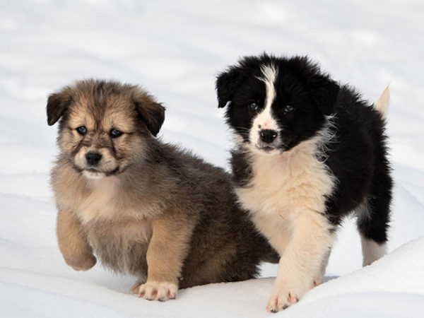 puppies, socialize your puppy