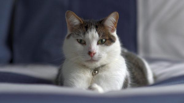cat photo, body language, training