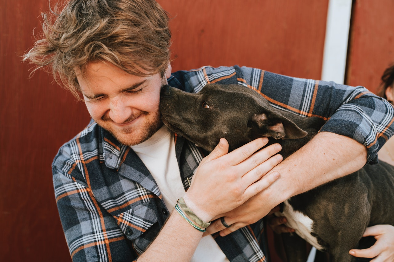 ADOPTING A SHELTER DOG 10 tips for a successful adoption - Ontario SPCA and  Humane Society