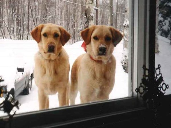 Linda's dogs, leave a legacy