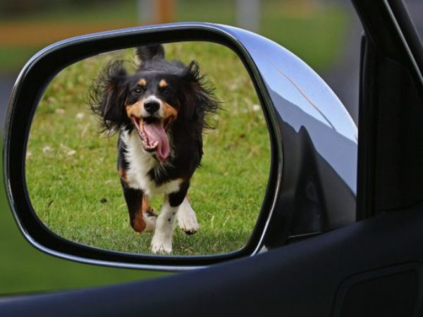 travel safety, pet safety,