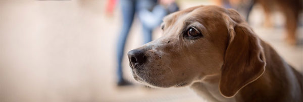 beagle-homepage-banner-1600×530