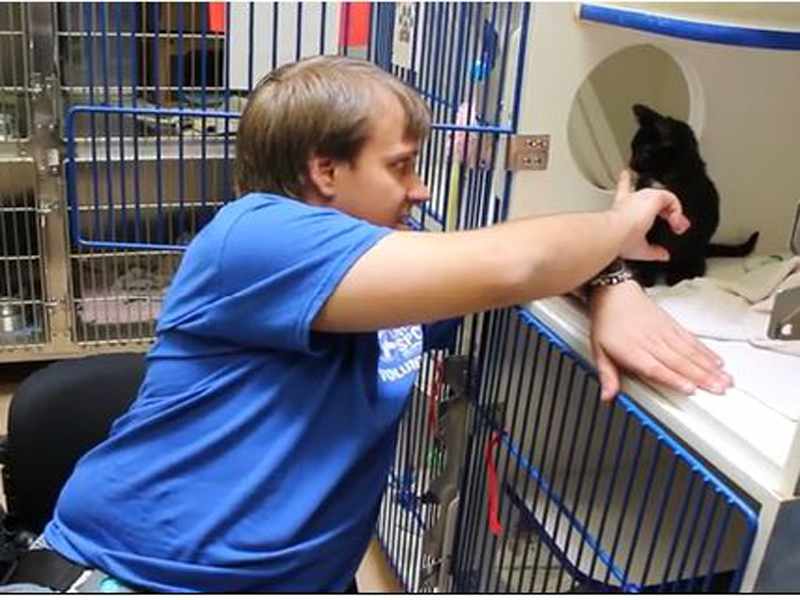 animal shelter volunteer with cat