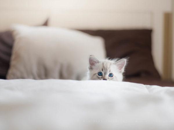 kitten, how to adopt a kitten, ontario spca