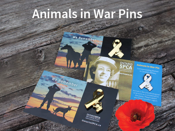remembrance day pins
