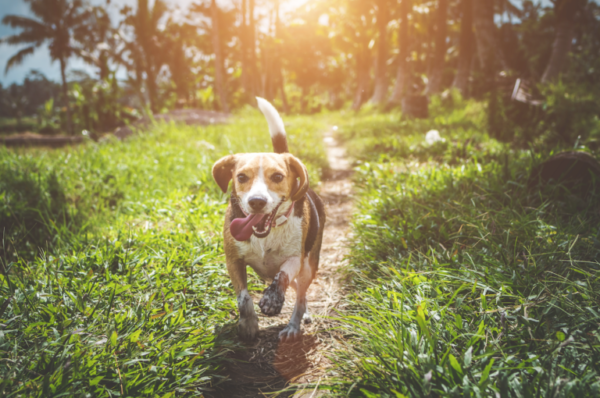 Dealing with fleas and ticks