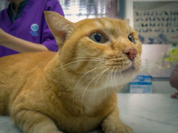 cat with veterinarian, cat at vet, cat tips