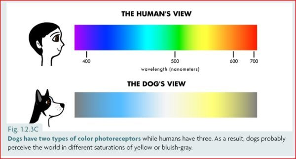 how dogs see colour diagram