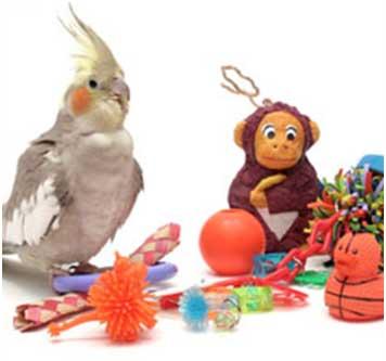 bird with toys