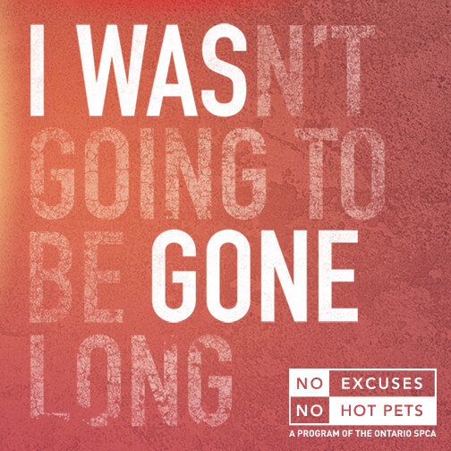 No Excuses. No Hot Pets.