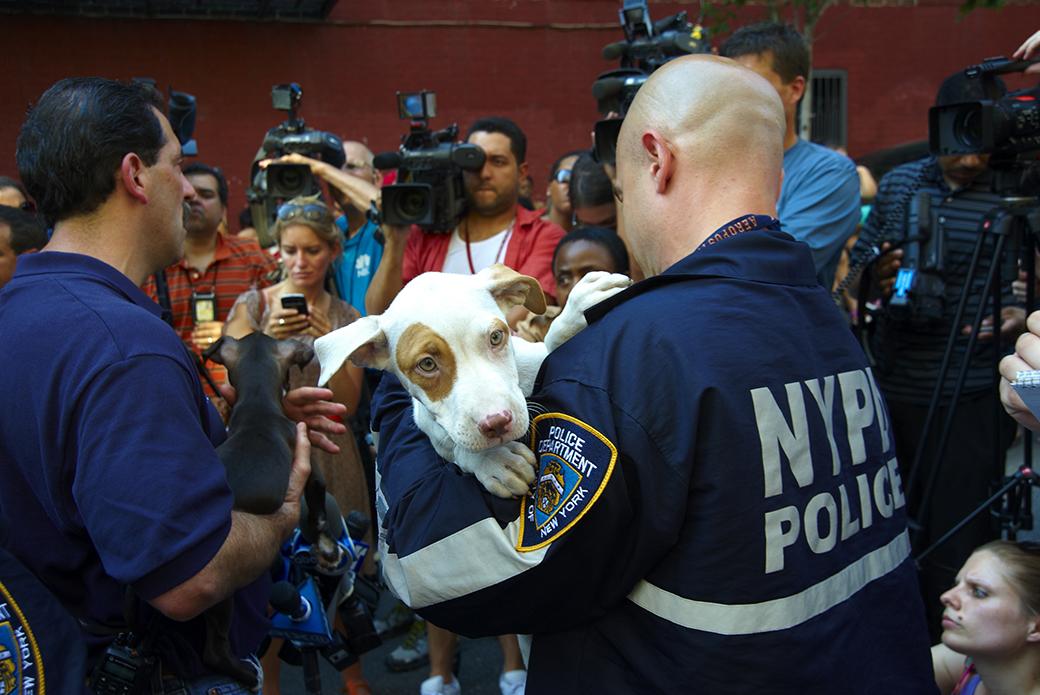 ASPCA celebrates investigation anniversary - Ontario SPCA