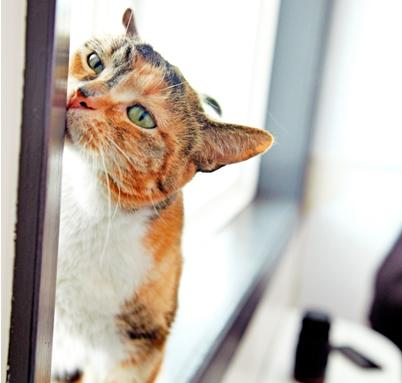 cat rubbing face on window